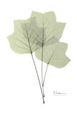 Tulip Tree in Green Print by Albert Koetsier