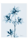 Azalea in Blue II Prints by Albert Koetsier