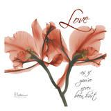Royal Red Orchid, Love Prints by Albert Koetsier