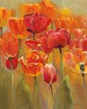 Tulips in the Midst I Plakaty autor Marilyn Hageman