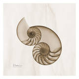 Brown Shell Pair Posters by Albert Koetsier