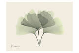 Ginkgo on Beige Posters by Albert Koetsier