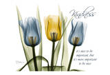 Tulip, Kindness Prints by Albert Koetsier