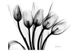 Early Tulips N Black and White Print by Albert Koetsier