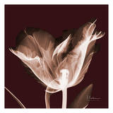 Tabitha Tulip Single Prints by Albert Koetsier