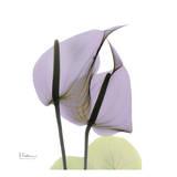 Albert Koetsier - A Gift of Flowers in Lavender - Reprodüksiyon