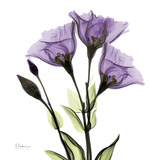 Gentian in Purple Print by Albert Koetsier