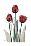 Early Tulips in Red Print by Albert Koetsier