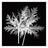 Spiky Leaves Black and White Prints by Albert Koetsier
