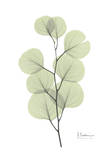 Eucalyptus in Pale Green Kunstdrucke von Albert Koetsier