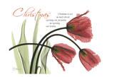 Albert Koetsier - Christmas Tulips - Sanat