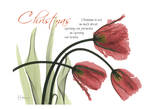 Christmas Tulips Print by Albert Koetsier