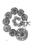 Swirl of Sand Dollars Prints by Albert Koetsier