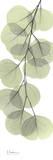Eucalyptus in Green III Poster von Albert Koetsier