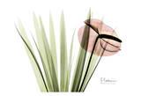 Flamingo Plant in Color Art by Albert Koetsier