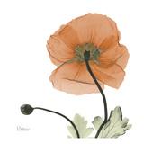 A Gift of Flowers in Orange Kunstdrucke von Albert Koetsier