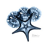 Starfish in Blue Prints by Albert Koetsier