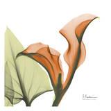 A Gift of Calla Lilies in Orange Poster von Albert Koetsier