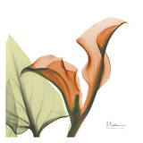 A Gift of Calla Lilies in Orange Art by Albert Koetsier