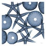 Collage of Starfish and Sea Urchins Plakaty autor Albert Koetsier