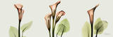 Spring Calla Lily Triple Posters by Albert Koetsier