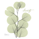 Eucalyptus Green, Serenity Plakater af Albert Koetsier