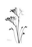 Fox Glove in Black and White Prints by Albert Koetsier