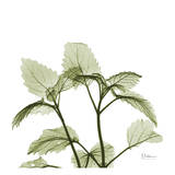 Green Leaves in Bloom Print by Albert Koetsier