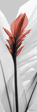 Curcuma Red With Black and White Prints by Albert Koetsier