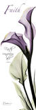 Calla Lily in Purple, Faith Affiches par Albert Koetsier