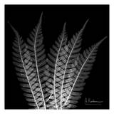 Tree Fern on Black Poster by Albert Koetsier