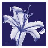 Lily White on Purple Prints by Albert Koetsier