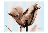 Single Tulip Brown on Blue Art by Albert Koetsier