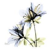 Blue Twin Azalea in Bloom Reprodukcje autor Albert Koetsier