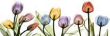 Colorful Tulip Scape Kunst van Albert Koetsier