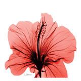 Close Up of Red Beauty Kunstdruck von Albert Koetsier
