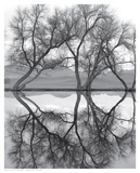 Clarity in the Waters Kunstdrucke