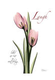 Tulip in Pink, Laugh Kunstdruck von Albert Koetsier