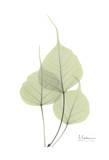 Bo Tree in Pale Green Prints by Albert Koetsier