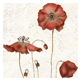 Poppies Trio Prints by Carol Kemery