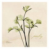 Parsley in Bloom Prints by Albert Koetsier