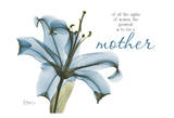 Blue Lily, Mother Posters by Albert Koetsier
