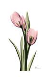 Annie Tulip Kunstdrucke von Albert Koetsier