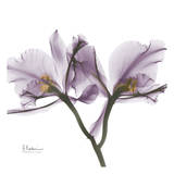 Orchid in Purple Print by Albert Koetsier