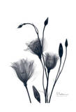 Bouquet of Gentian in Black and White II Print by Albert Koetsier