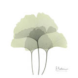 Ginkgo Trio in Green Print by Albert Koetsier
