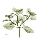 Green Leaves in Bloom II Poster von Albert Koetsier