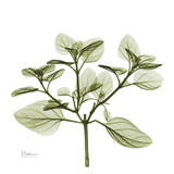 Green Leaves in Bloom II Prints by Albert Koetsier