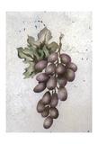 Glorious Grapes II Prints by Carol Kemery