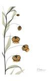 Sandersonia Bouquet in Bloom Art by Albert Koetsier
